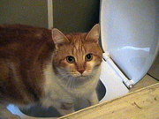 LOVE urgently needed I'm spayed, vaccinated and flea treated